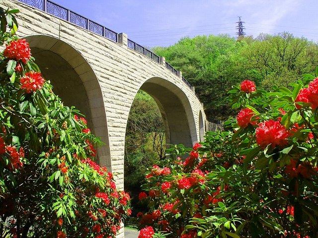 「森のかけはし」と呼ばれている白く優雅な橋。深紅のシャクナゲとのコントラストが美しい。橋からは七沢の街並み、神奈川県の屋根とも呼ばれる丹沢山塊の雄大な景色を望むことができる